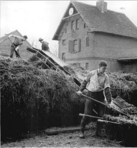 Молодёжная бригада в хлеву около Лейпцига (Германская Демократическая Республика) укладывает навоз, который затем будет использован для повышения плодородия почв. 1963