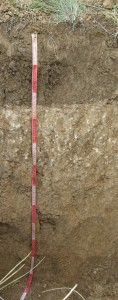 Профиль пахотной каштановой почвы, Волгоградская область, Россия